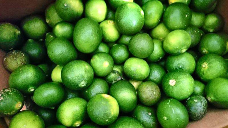 人生を変えたひとつの食材 / 愛媛の無農薬栽培「摘果ミカン」がやってきます